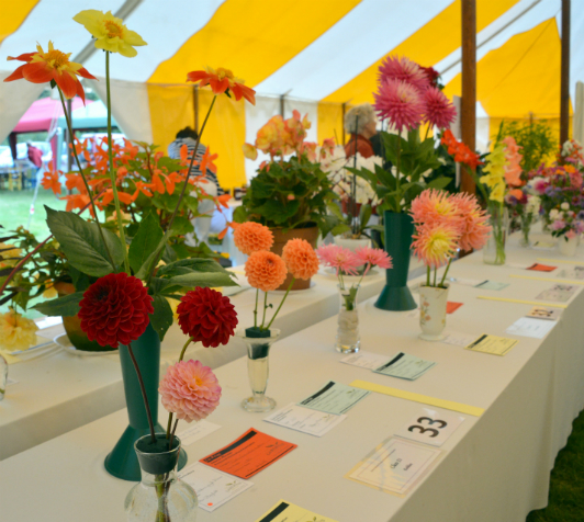 Picture courtesy of Iwerne Minster Produce and Horticultural Association's Summer Show.