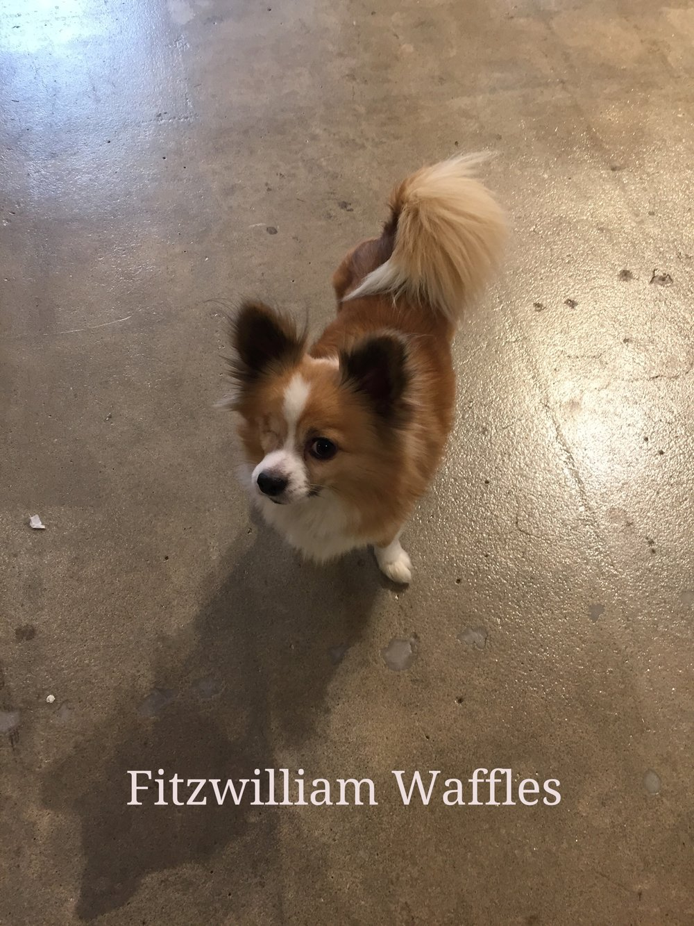 RB Fitzwilliam Waffles.jpg
