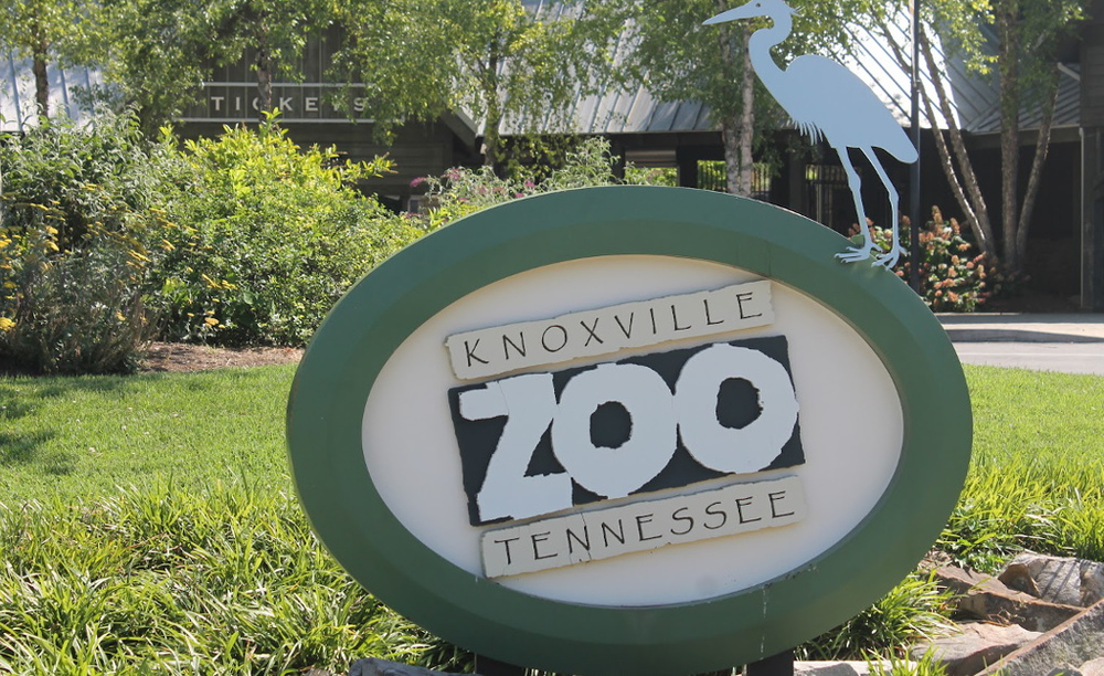 LEADERSHIP IN TRANSITION  When Lisa New became Executive Director at  Knoxville Zoo,  it was clear she had big plans. Zoo Advisors was engaged to create a strategic plan that would guide the Zoo through the upcoming years to make those plans a reality.