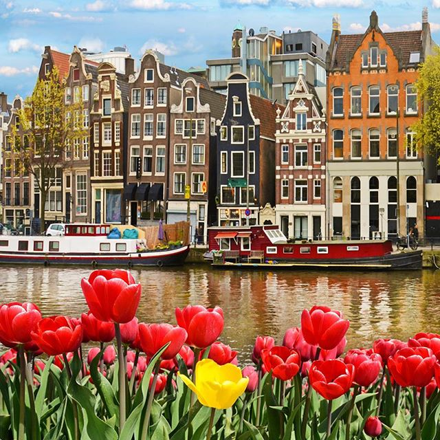 Tulip time in Amsterdam is just around the corner! Click the link in our bio to find out how you can join one of our tours and enjoy this view yourself!🌷 #eotours #amsterdam #tuliptime