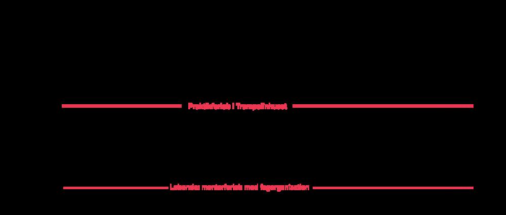 Figur 2: Next Practice-forløbet