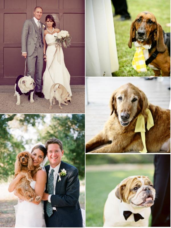 a lowcountry wedding blogs featuring charleston weddings, hilton head weddings, myrtle beach weddings, southern weddings