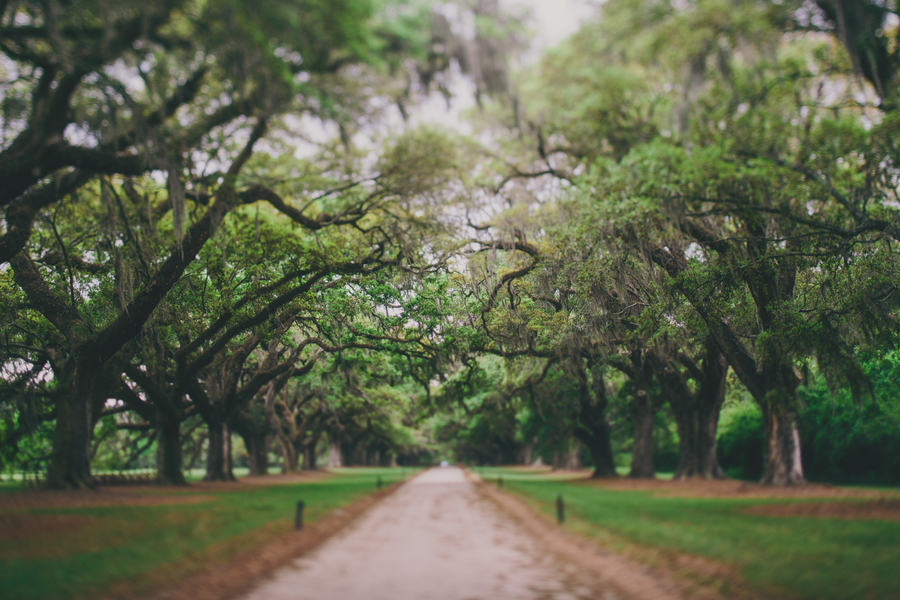 Charleston wedding at Boone Hall Plantation