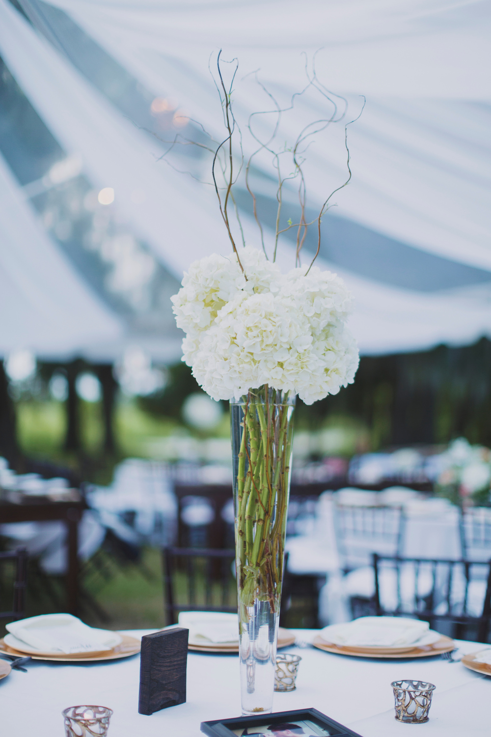 Litchfield Plantation Wedding