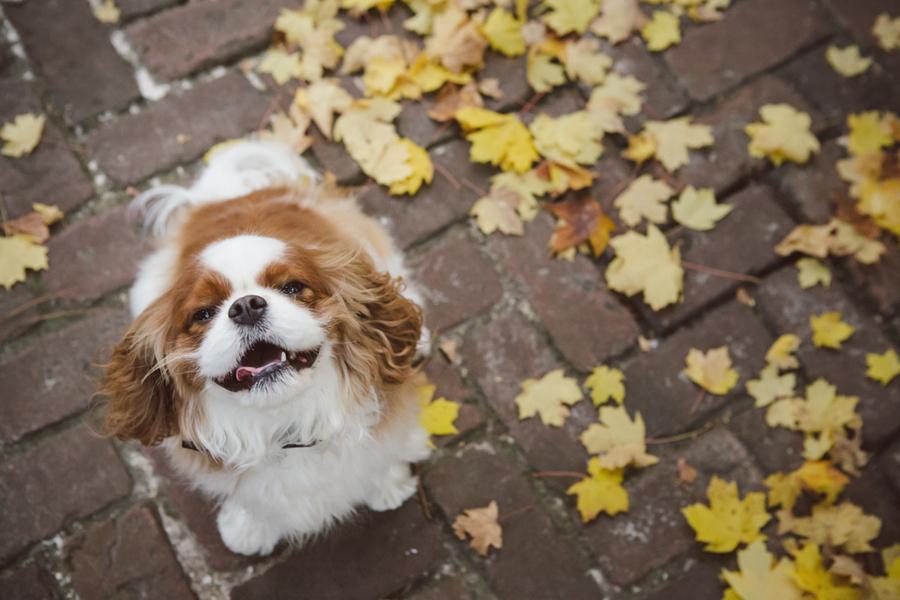 Charleston wedding dog nanny services - Dog Tired