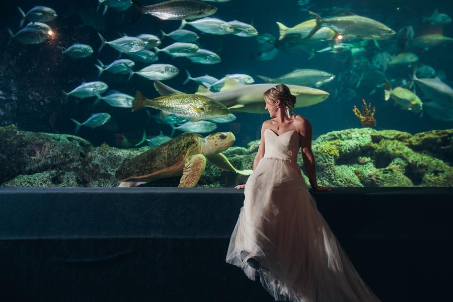 South Carolina Aquarium Wedding by Sage Innovations — A Lowcountry ...