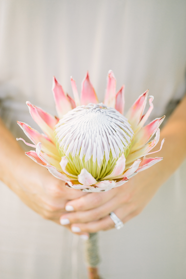 King Protea Wedding bouquet at The Island House