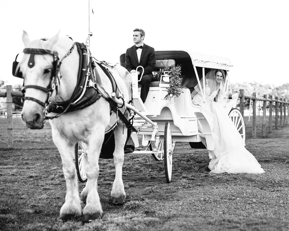 Charleston bride in a Calle Blanche gown in a white horse and carriage on Sugah Cain Plantation  // Old South Carriage Company  Bride and her maids at Sugah Cain Plantation in front of white horse and Carriage  //  on A Lowocountry Wedding Magazine & Blog