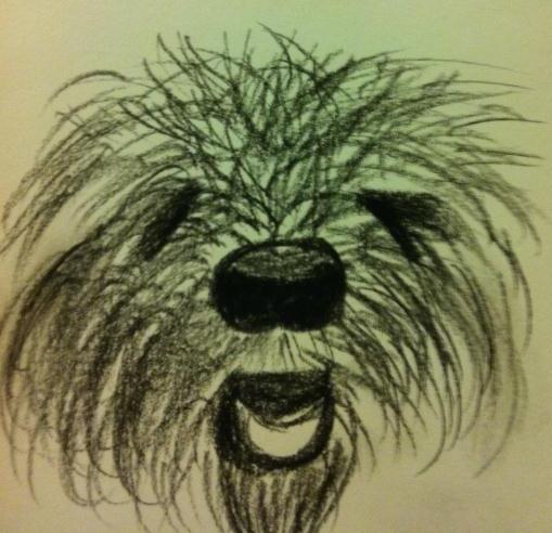 A drawing of my goldendoodle, Kasanova from 2012.