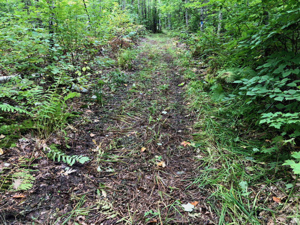 Wider Trails - Should be great for snowshoes & skis this winter!