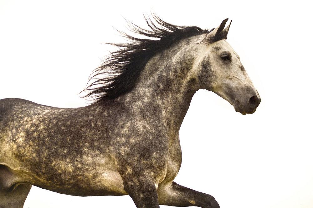 Equine Art 05