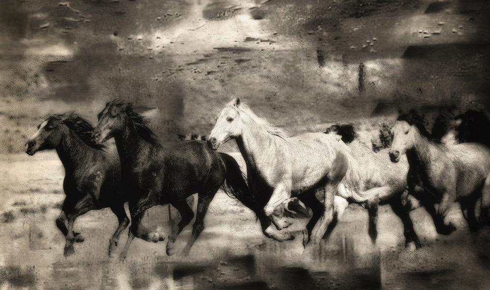 Equine Art 03