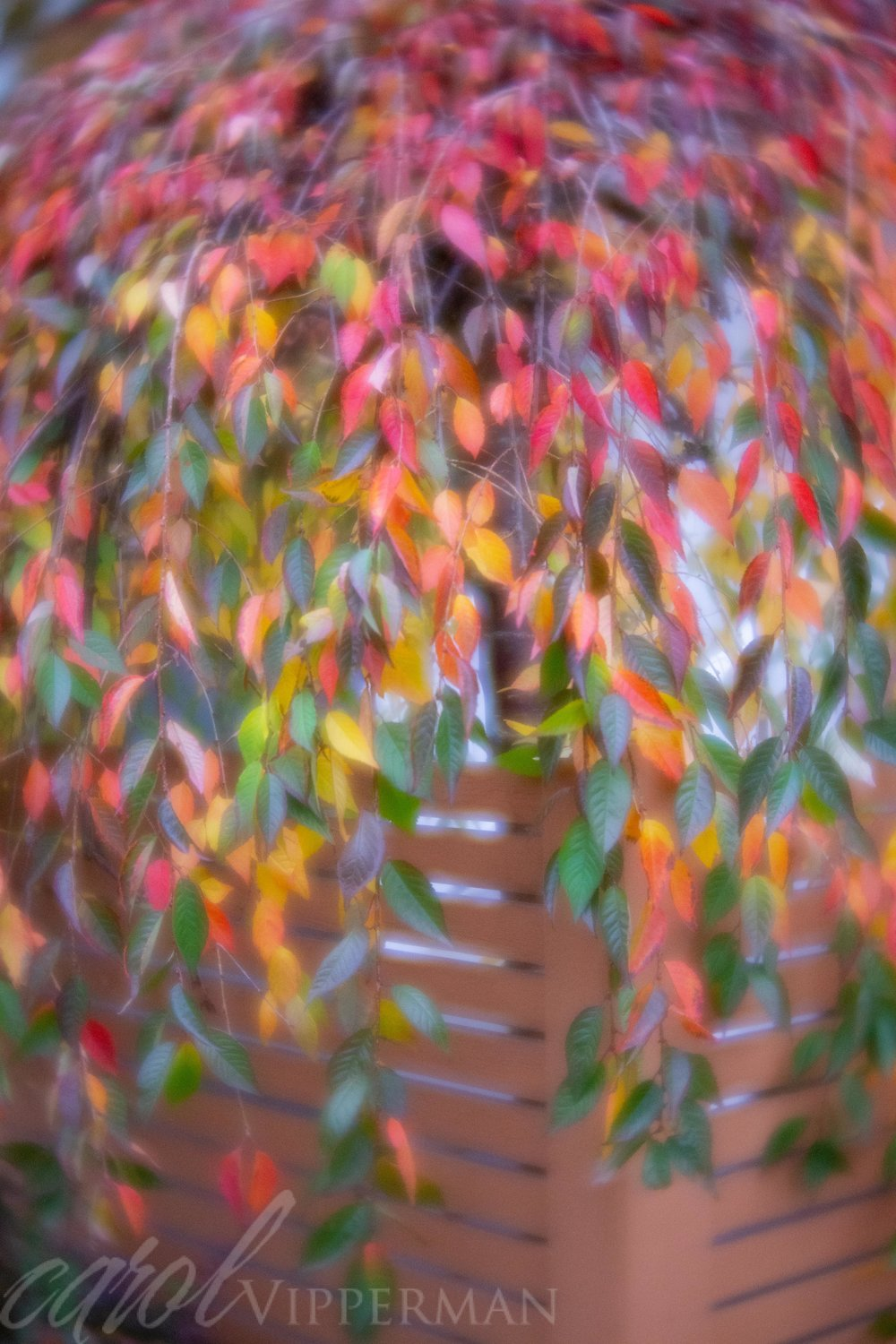 Cascading leaves