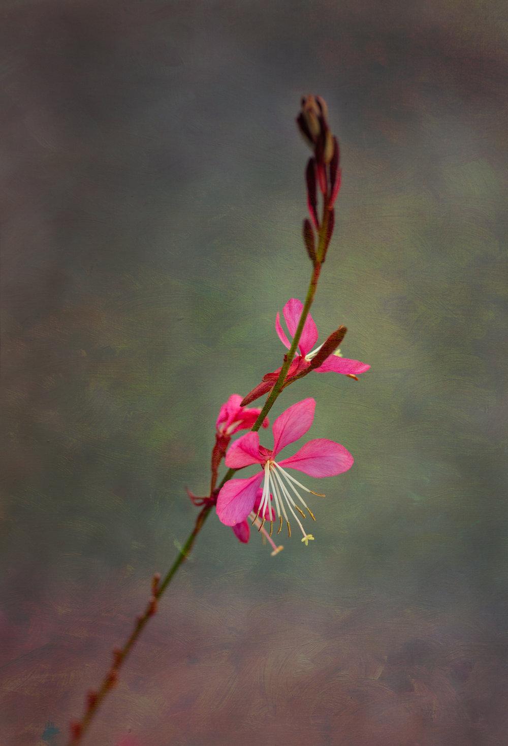 Spring Debut