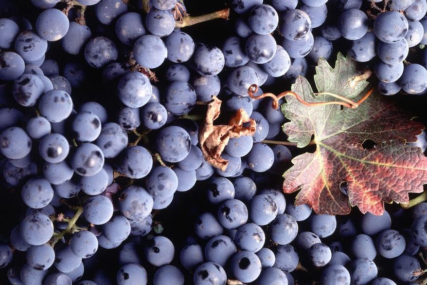 wine starter cultures    ﹀