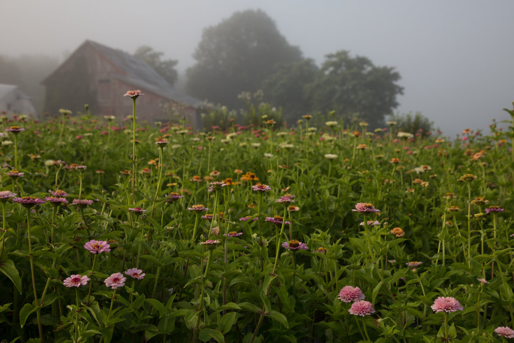 fleurs locales Floramama