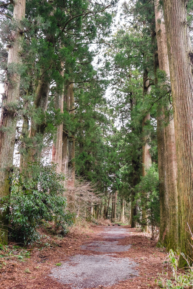 Hakone Stone Paved Road