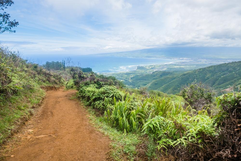 maui hawaii waihee ridge trail