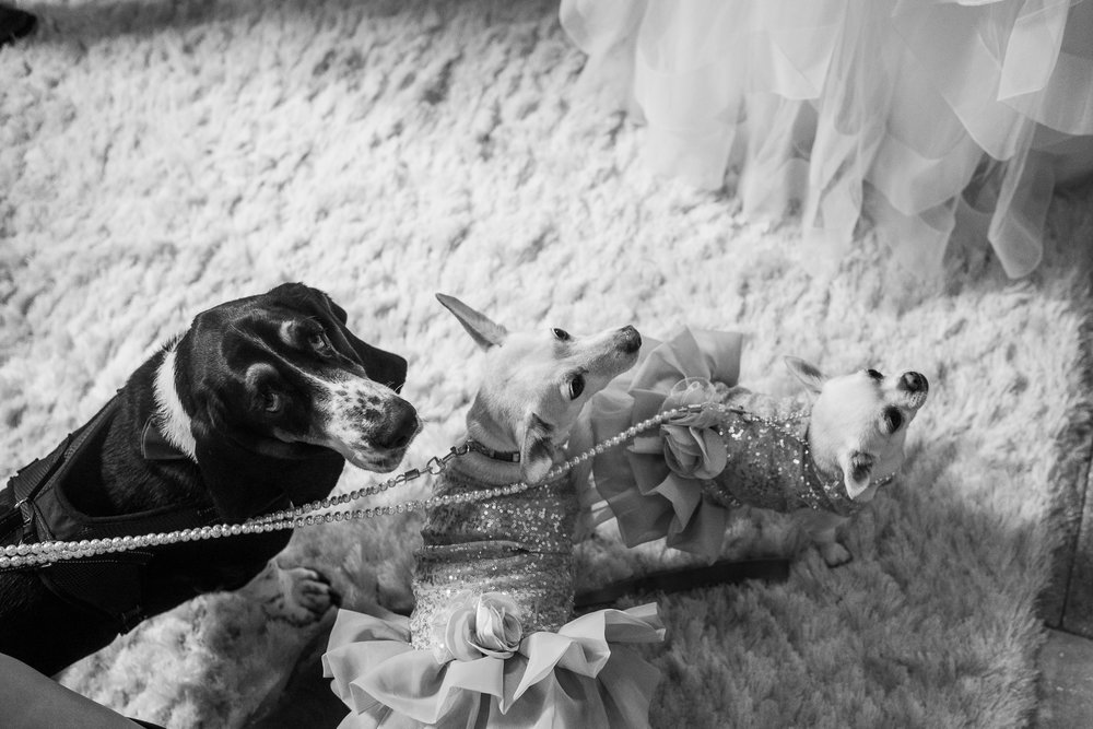 TAMPA_WEDDING_PHOTOGRAPHER_DRMZ_SPARROW_BARN_20.jpg
