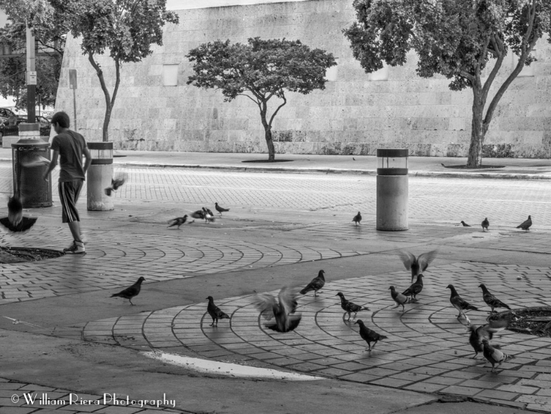 Boy playing with pigeons...
