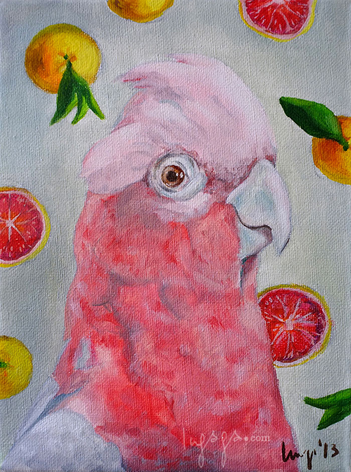 PINK GUACAMAYA WITH ORANGES  18 x 20cm  Oil on canvas / 2014