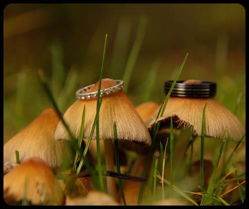 Marwell Hotel Mushrooms and rings Wedding photo cardiff best