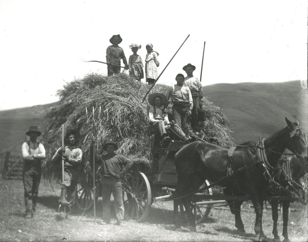 Since 1871, Peter Dolcini leased then bought a 1,500-acre ranch, which James Black originally had purchased from Henry Halleck.    Workers on the Dolcini Ranch bring in the hay.
