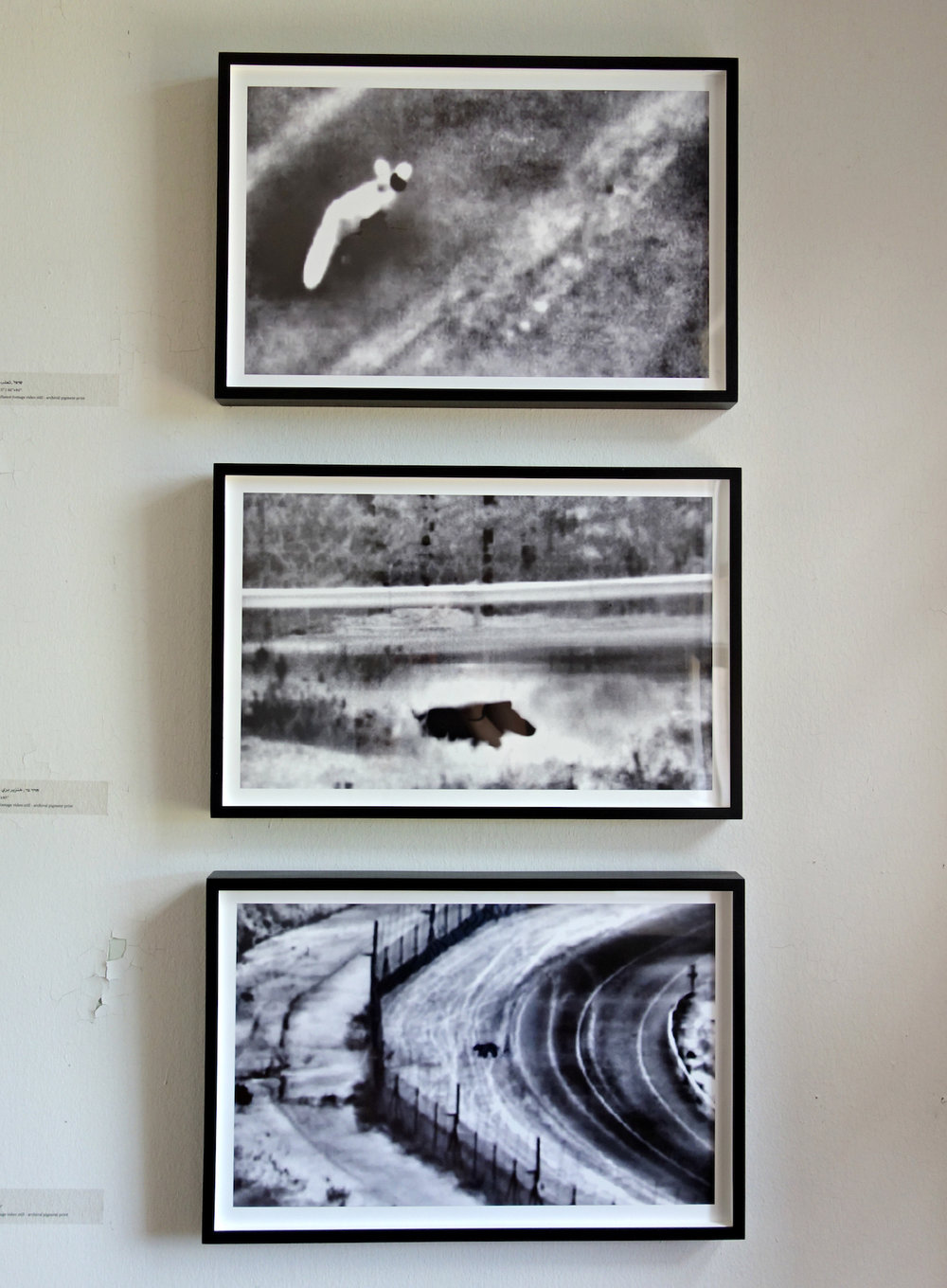 Surveillance footage stills of animals by Netta Laufer -  Installation at Governor's Island Art Fair