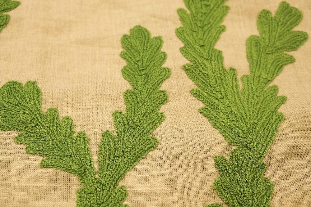 Cereus detail