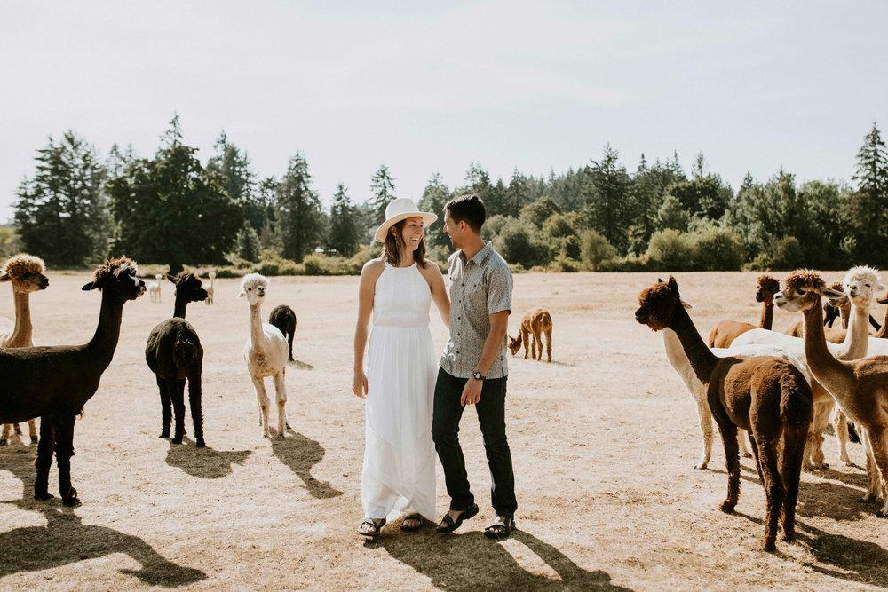 Alpaca farm in Portland, Oregon