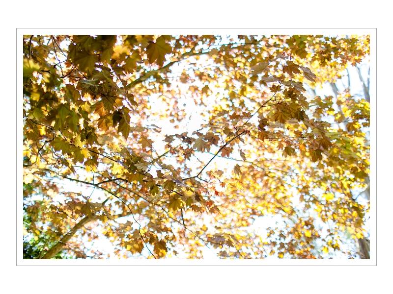 PuyTaldePhoto_Mark_Ember 024 (Sides 47-48).jpg