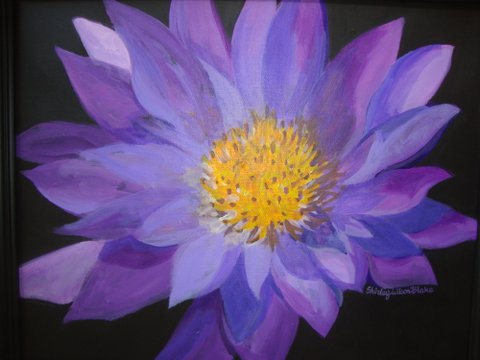Surface water Lily-16 x 20-Shirley Blake.JPG