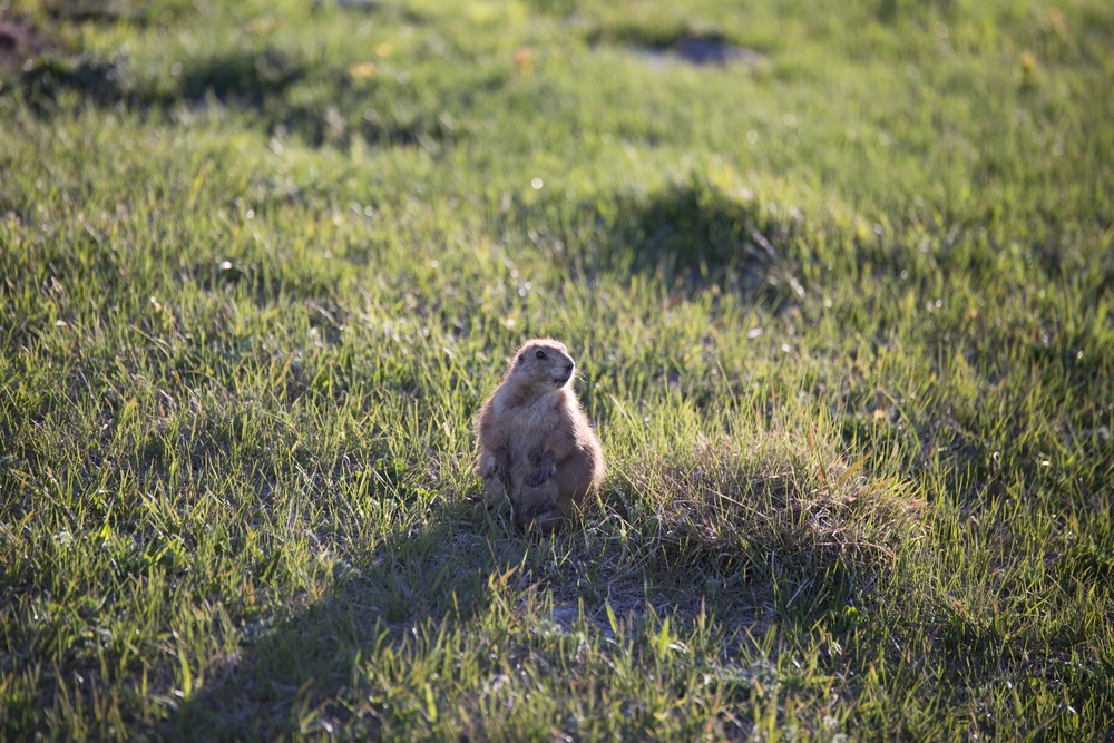 The Prairie Dogs will make you laugh! They're so silly and fun to watch!