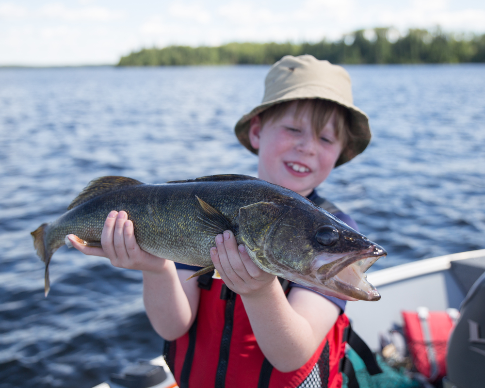 We mainly fished for walleyes. They were big and plenty.
