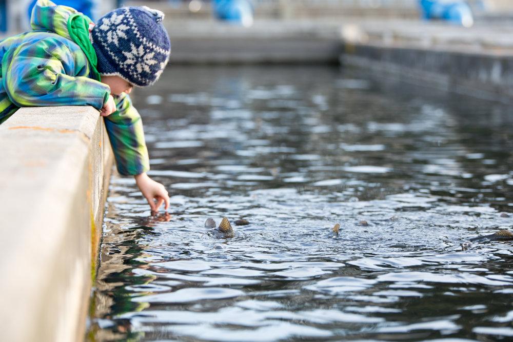 feeding trout