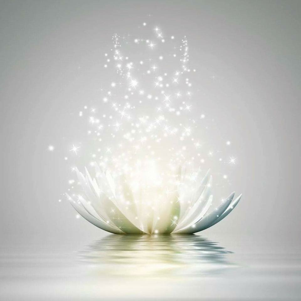 light+lotus+pic.jpg