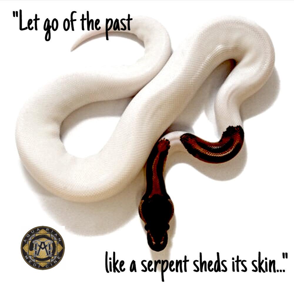 AM white snake.jpg