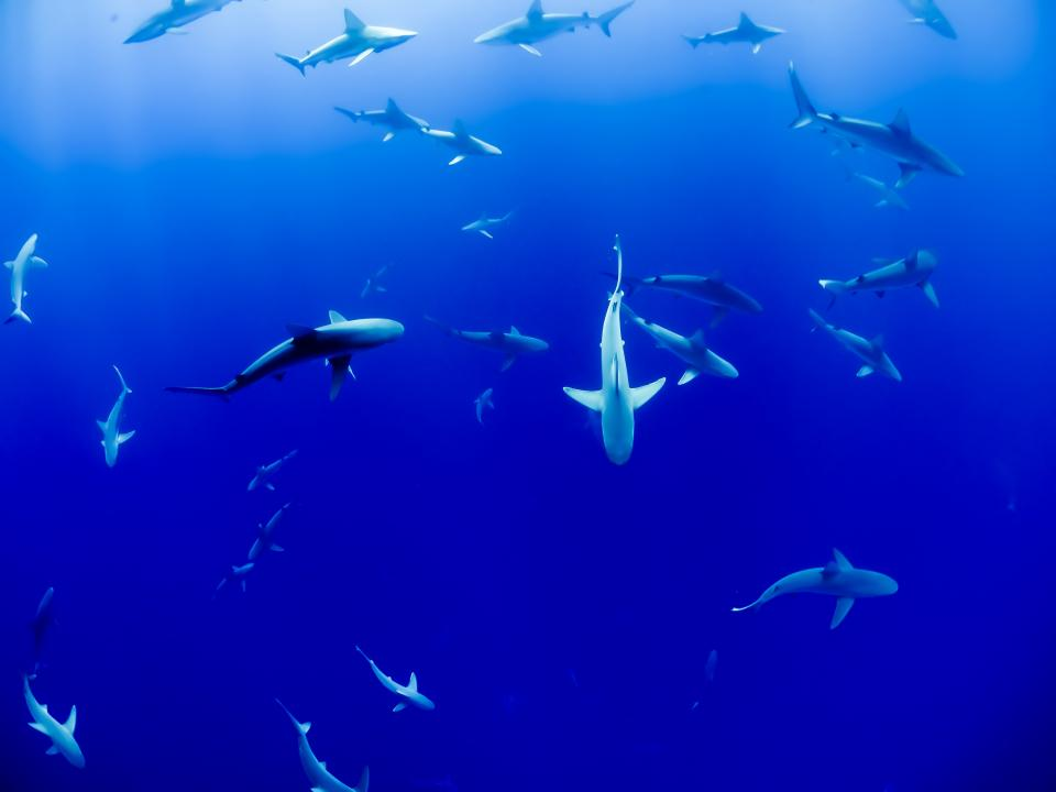 Underwater-sharks.jpg