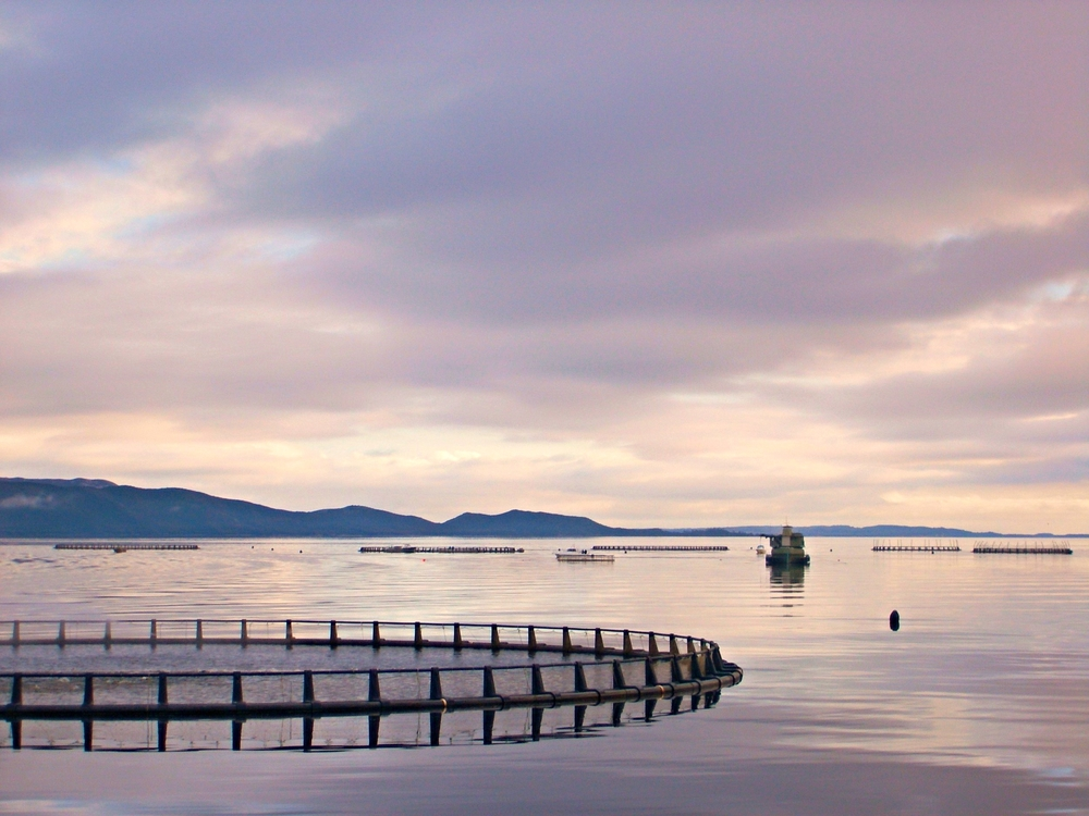 fish farms in Strahan.JPG