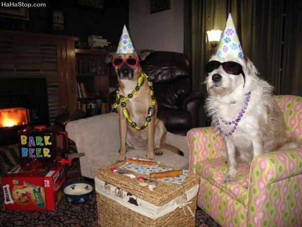 Dog_Birthday_Party.jpg
