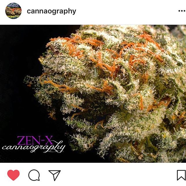 Beautiful shot of #zenx by @cannaography!! Thanks for the tag!!