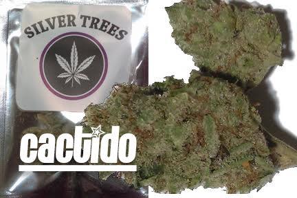 Silver Trees Cactido