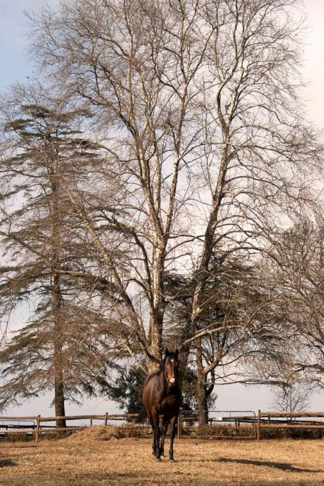 backworth-winter-broodmares-32.jpg