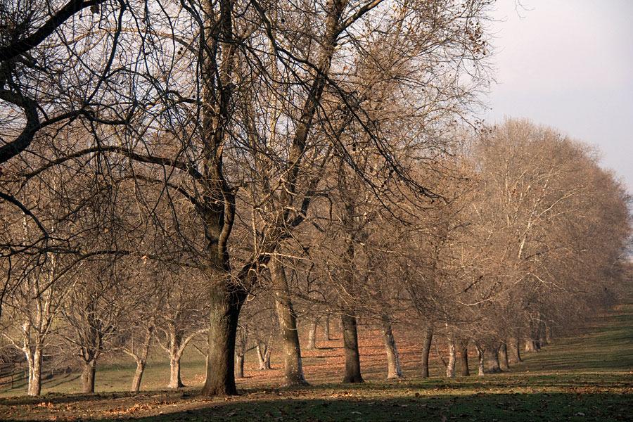 backworth-stud-winter-avenue.jpg