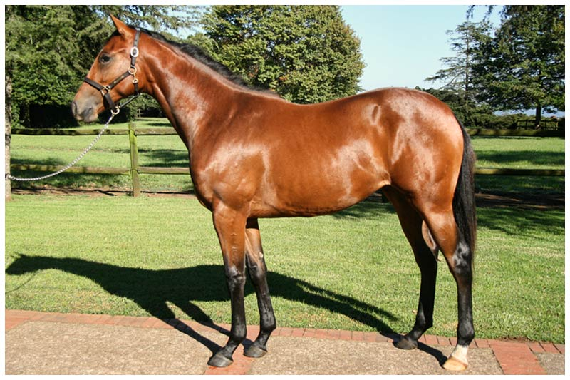 National Yearling Sale - Lot 199 - Summer Flush - Silvano - September Bells