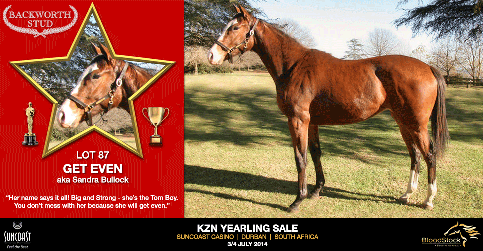 kzn yearling sale lot 87 get even
