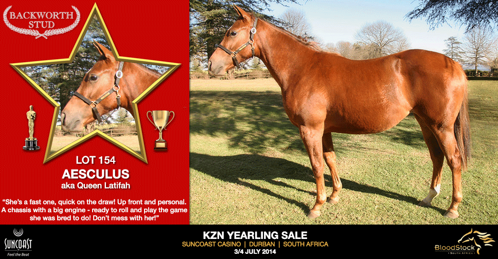 kzn yearling sale lot 154 aesculus