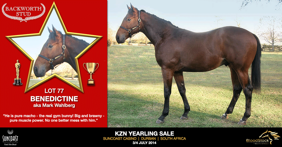 kzn yearling sale lot 77 benedictine