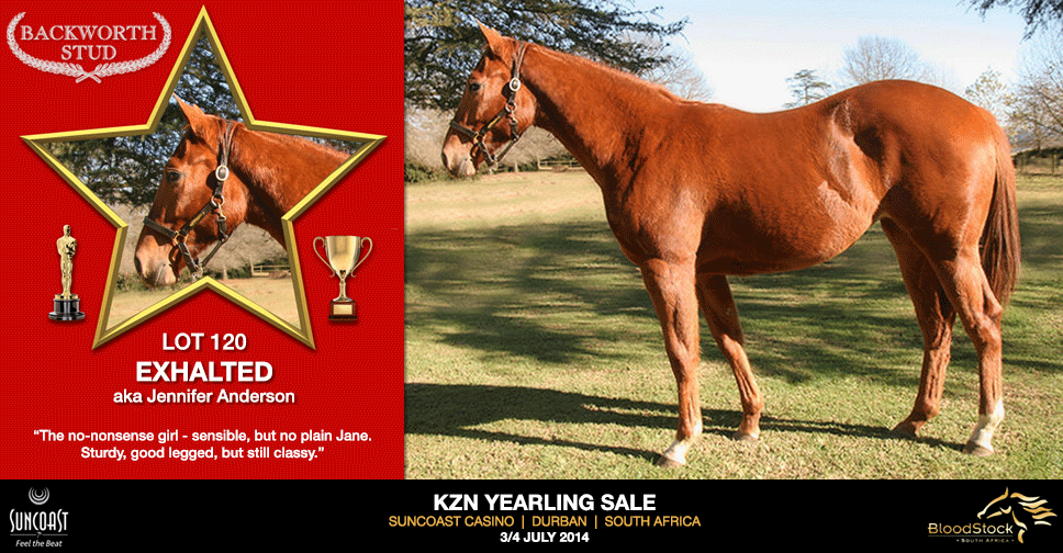 kzn yearling sale lot 120 exhalted