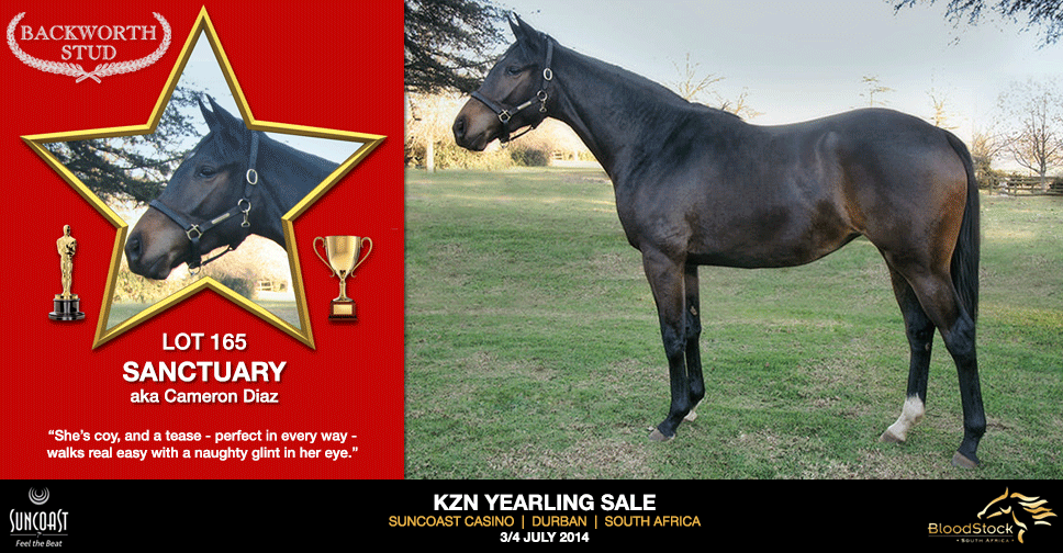 kzn yearling sale lot 165 sanctuary